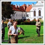 A Magyar Solymász Egyesület tisztújító közgyűlése